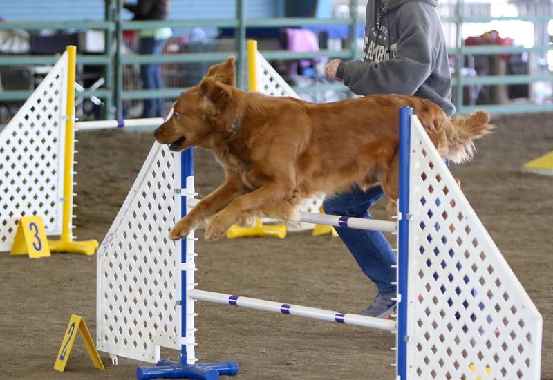 3-15-2015 Bloodhound-0606.jpg