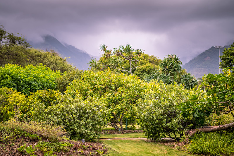 Went to a nearby botanical garden.  Wet, windy and cool.