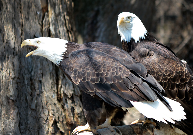 two_eagles_lowres.jpg