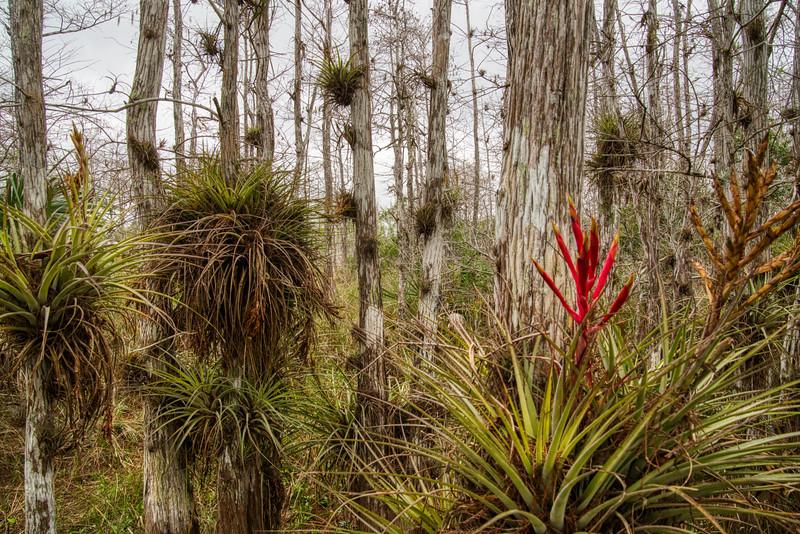 Everglades 2020-1.jpg