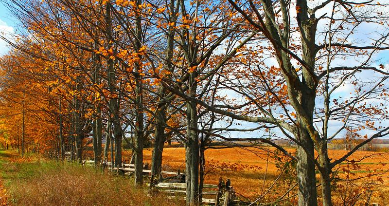 SM Mulmer Hills Fall Wide.jpg