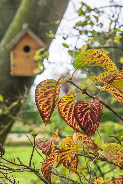 Hob Green autumn-9.jpg