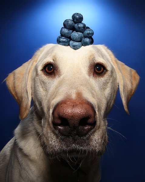 Stack Of Blueberries.jpg