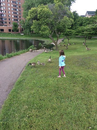 the kiddolinas and the birds at the park