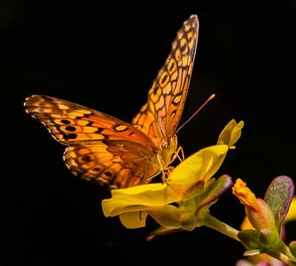 Bees, birds & other backyard beasties
