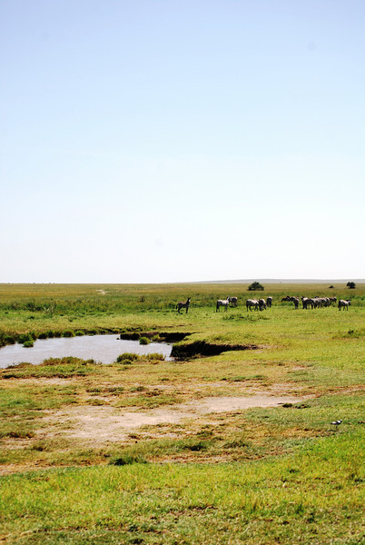 Serengeti (156).JPG