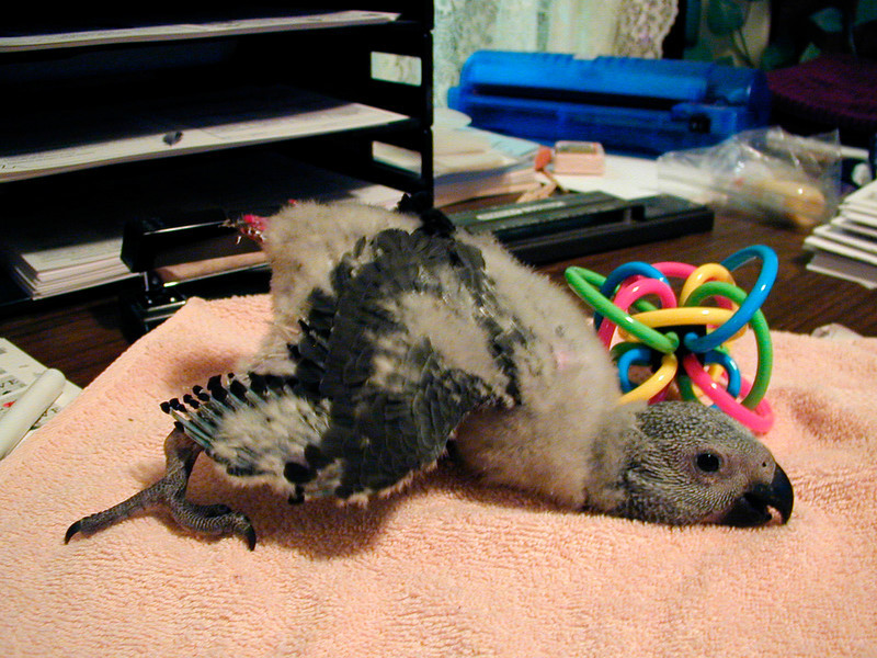 Three-Legged Crawl