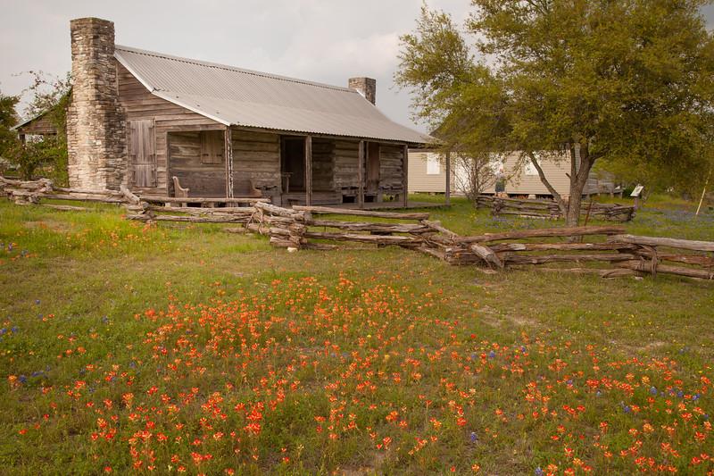 2015_4_3 Texas Wildflowers-8126.jpg