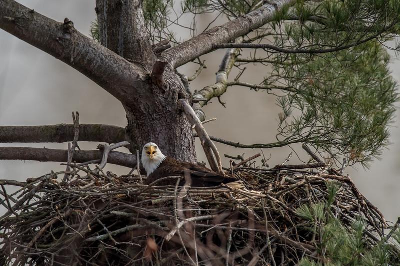 ulster-eagle-176.jpg