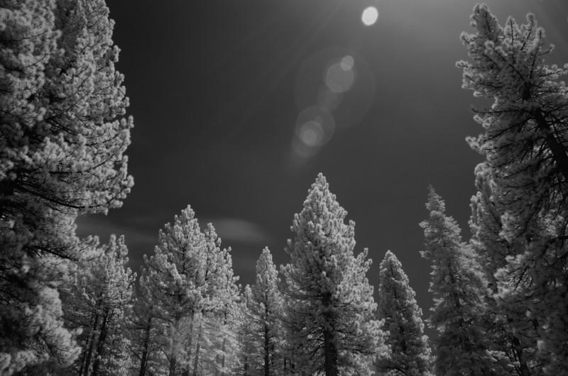 tahoe-2005.jpg