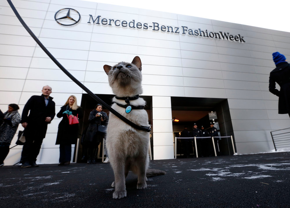 . Purina ONE challenges misconceptions by featuring leash-trained cats during Fashion Week in New York as part of Purina ONE\'s Healthy Metabolism launch, Sunday, Feb. 10, 2013. (Jason DeCrow/Invision for Purina ONE/AP Images)