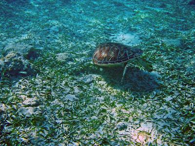 Honduras Reef Life