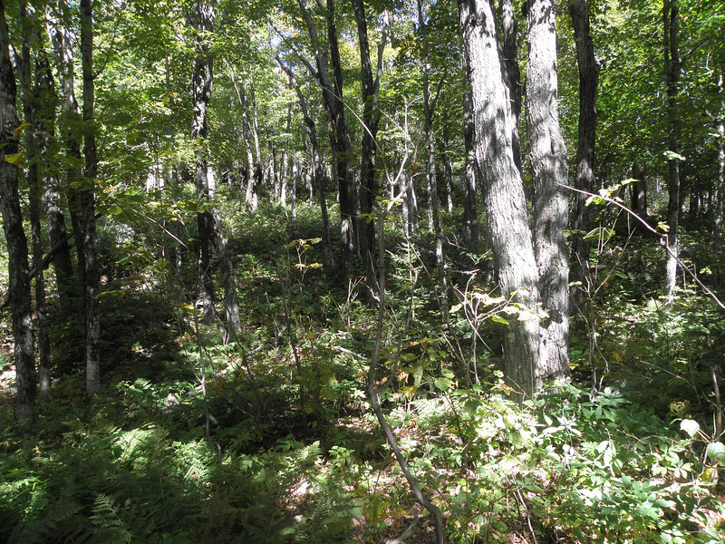 Good woods don't end.JPG