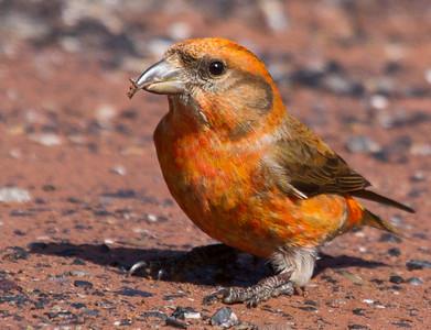 Shenandoah Mountain Birds & Bugs - Virginia