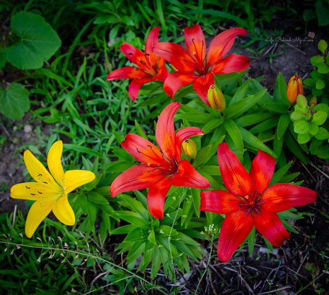20200617-flowers.jpg