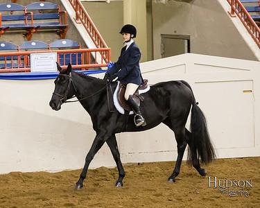 61 Classic Hunter Under Saddle Horses Sr