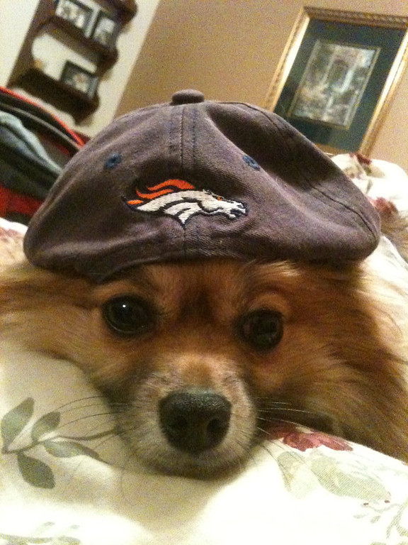 . Rocco Is Rooting For The Broncos!!