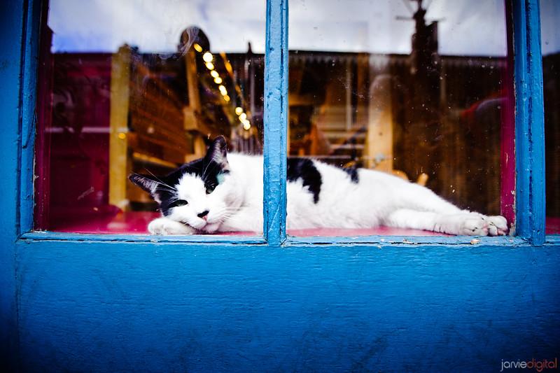 New Orleans - Cat