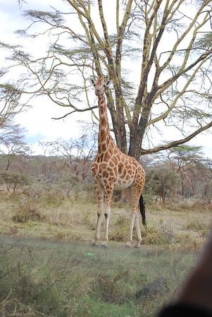15-04-09 Game Drive Nakuru