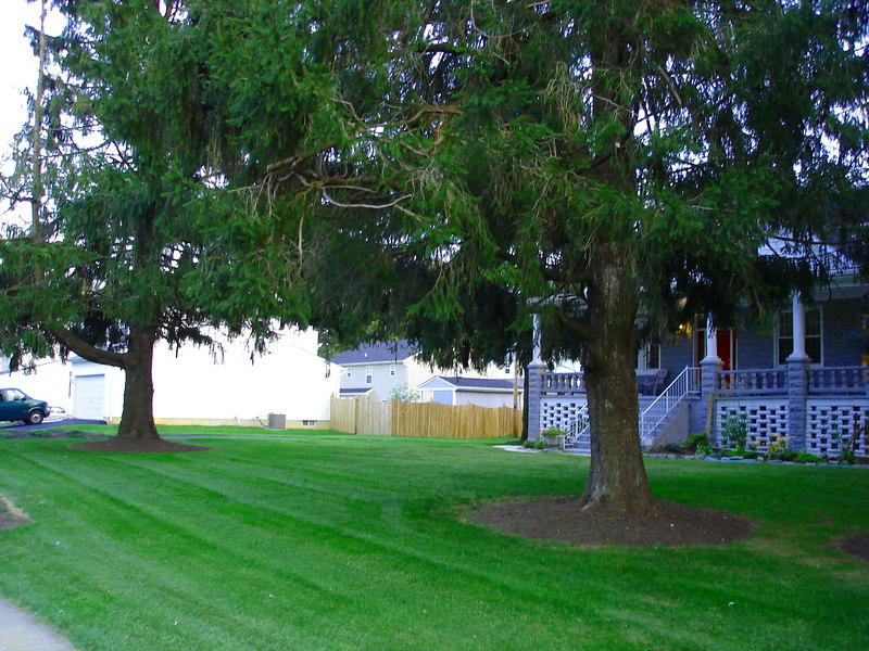 AFTER REMOVING 2 HUGE TREES, COUNTLESS BUSHES, AND SEVERAL HUNDREED DOLLARS WORTH OF SEED FERTILIZER AND TLC.