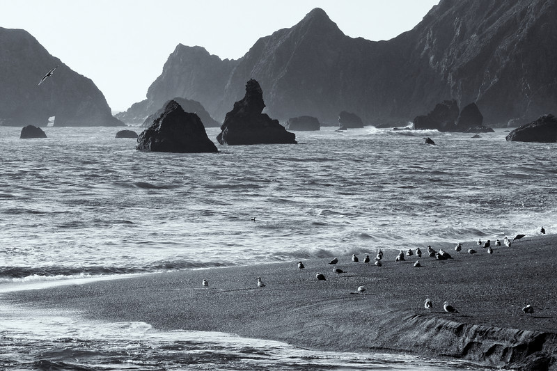 Birds along the Sonoma coast.