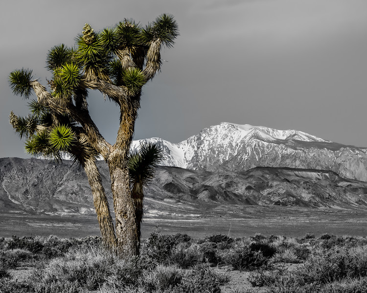 Joshua Tree and the  Sierras