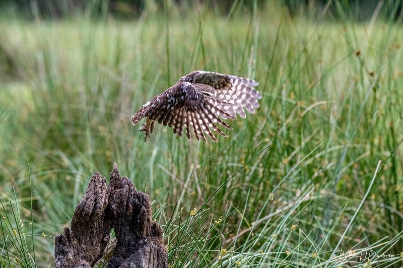 The Little Owl Shoot-6756.jpg