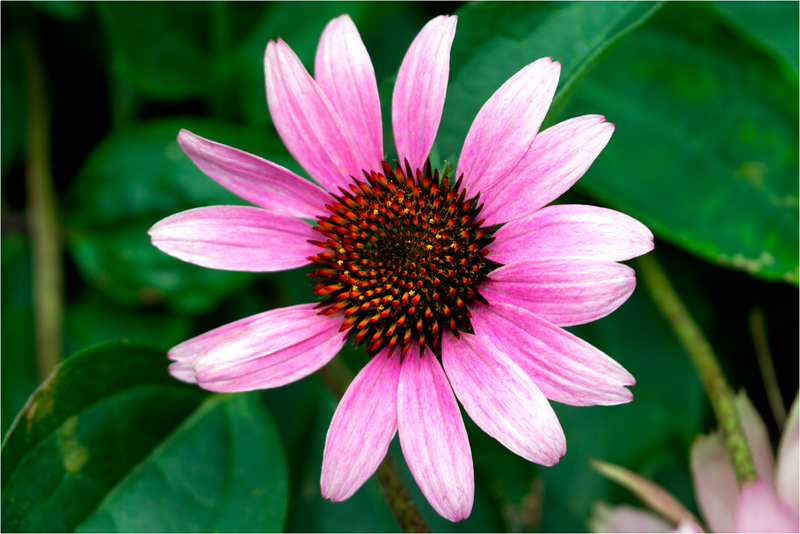 20120713_Flower_02.png