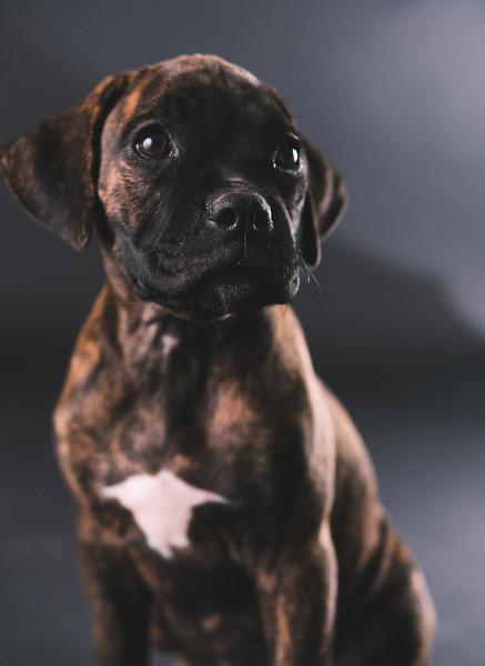 Pups-1083.jpg