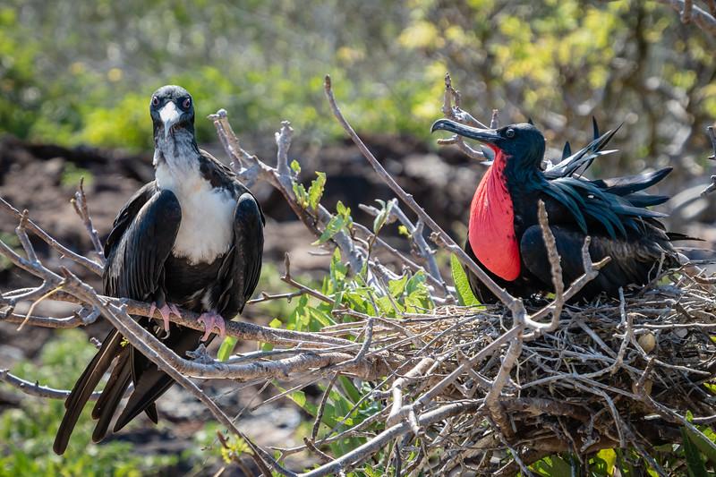 Galapagos-4119.jpg