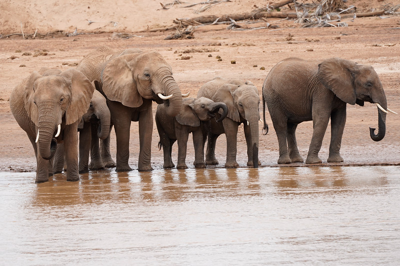 safari-2018-39.jpg