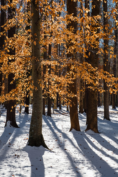 ©2020 Dennis A. Mook; All Rights Reserved; Tree Project--16.jpg