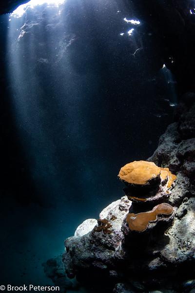 Coral in the Dark