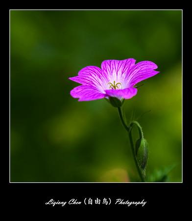 Unknown flower-7