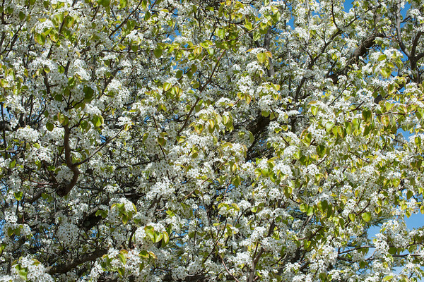 Spring Returns to Northern California With A Vengence!