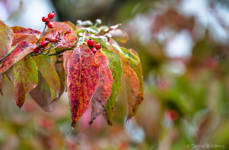 painted leaves and berries