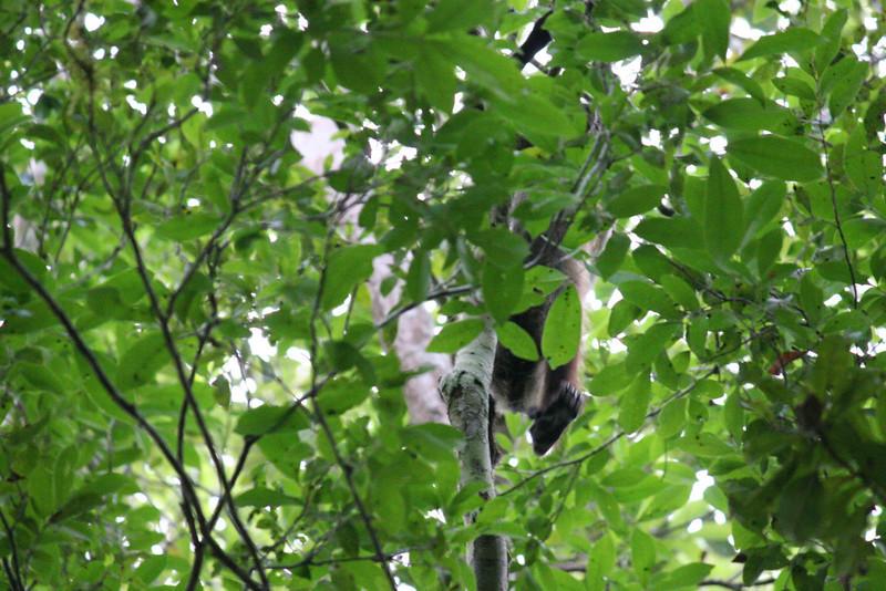 Guatemala Tikal 0 090.JPG