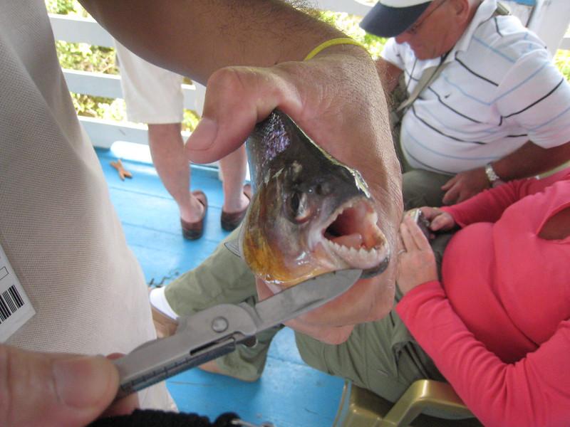 River Tour and Eco Maica Lake, Santarem, Amazon River, Brazil - Piranha!