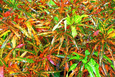 Naples BotanicalGardens - Aug. 15, 2021