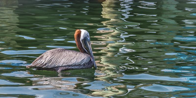 Pelican 1379