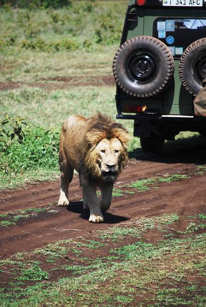 Ngorongoro (133).JPG