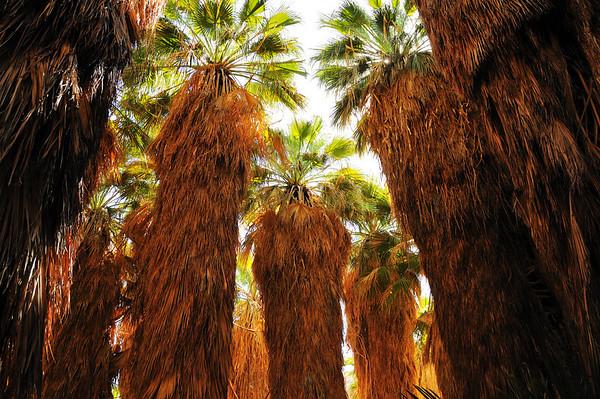 Thousand Palms Oasis