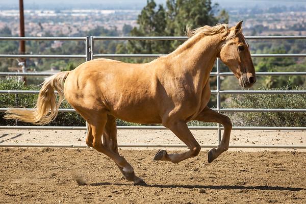 Norco Horse Affair 2018