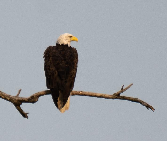 08-07-2020-eagles-3.jpg