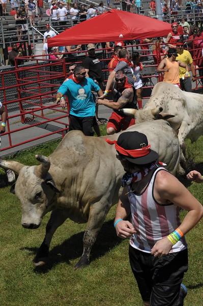 the-great-bull-run-art-glenn-11_49_20141019_1573684413.jpg