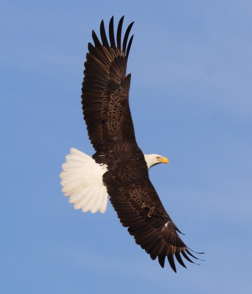 Eagle 82