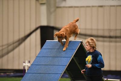 Burlington County Kennel Club AKC Agility Trial April 20-21