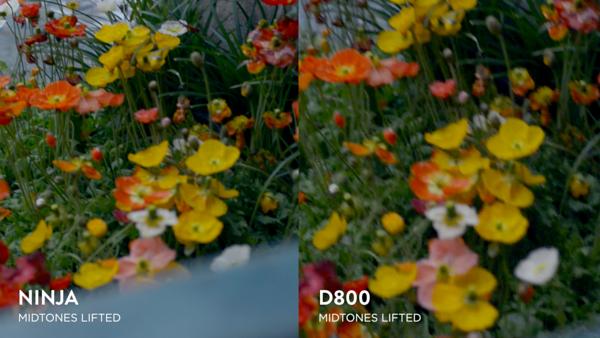 Atomos Ninja VS D800 In-Camera