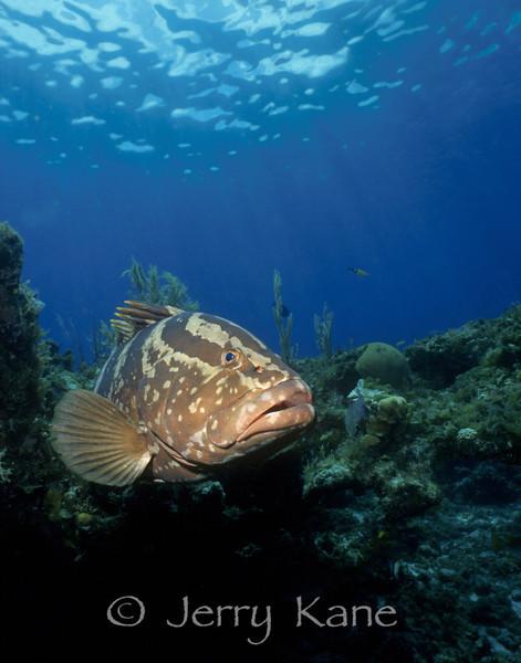 Grouper & Sea Bass