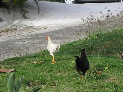 Saba land photos November 2011